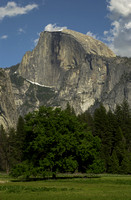 Half Dome and Tree