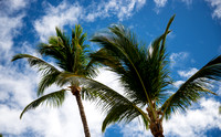 PalmTrees and clouds