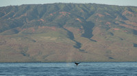 Whale Tail in front of Lana'i